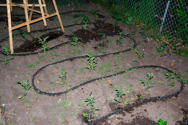 Comment arroser son potager le blog du potager d 39 anitta for Arrosage du jardin