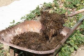Comment utiliser le fumier de cheval au potager le blog - Comment utiliser le crottin de cheval au jardin ...