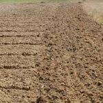 potager terre