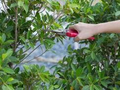 Comment tailler les plantes, arbustes et arbres