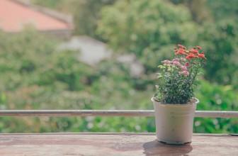 Comment rénover son jardin?