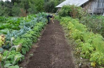 Jardin potager : les 4 gestes impératifs pour un entretien optimal!