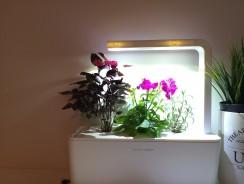 Comme cultiver un potager dans son appartement?