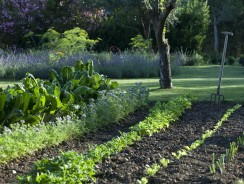Comment organiser son jardin potager