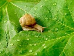 Comment éloigner les escargots du potager