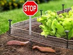Comment éloigner les limaces du potager