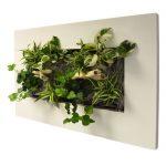 Comment faire un tableau végétal mural soi-même ?