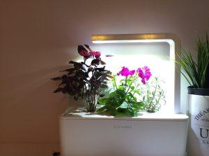 potager interieur le blog du potager d 39 anitta. Black Bedroom Furniture Sets. Home Design Ideas